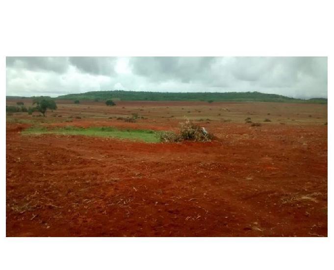 421 alqs da pivô esteve plantada avermelhada damianópolis