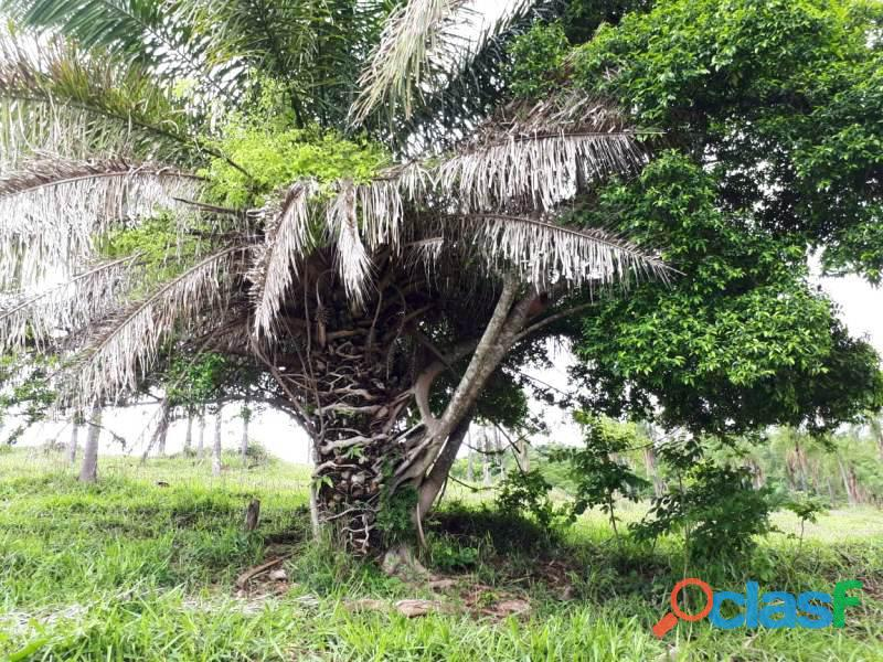 148 Alq. Culturão De Bacurí água própria sul goiano 1