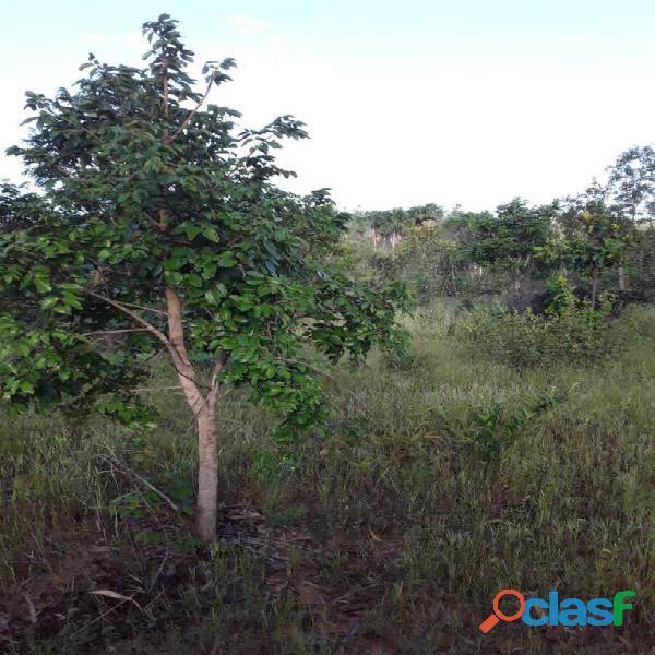 1.000 Alqueires Bruta Rica Em Água Plana Novo Acordo TO 5