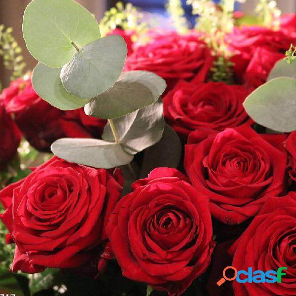 Egrow 100 pcs raro rose sementes cor misturada jardim de casa em vasos de sementes de flores decoração bonsai