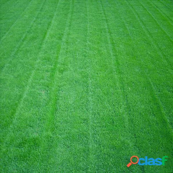 Grama de grama de grama de fuzileiro 10000pcs jardim gramado ideal