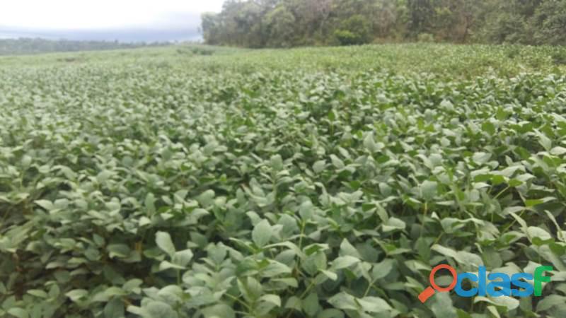 846 Alqs Região Lavoura 200 Abertos 100 Plantado Wanderlandia TO 5