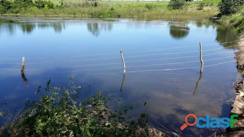 200 Alqs Melhor Região Terra Macia Calcariada Região de Araguaína