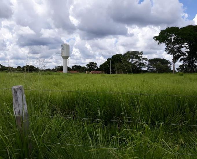 Fazenda 262 alqueires (1268 hectares) - figueirópolis-to