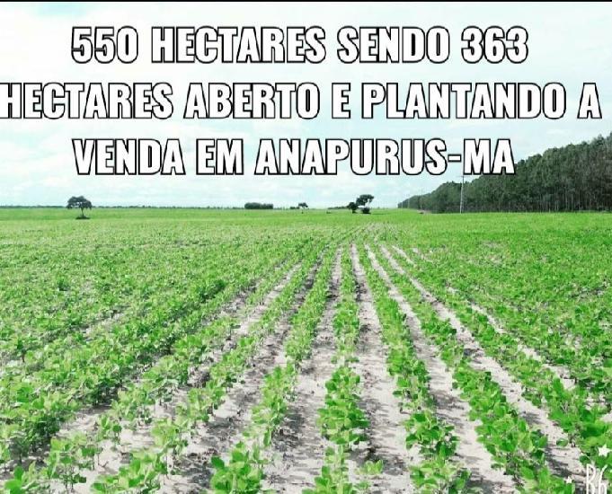 Vendo terra pra soja 550 hectares em anapurus maranhão