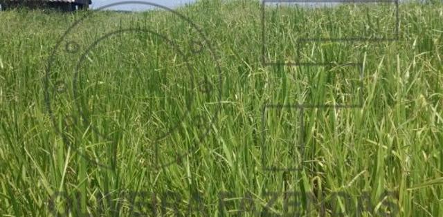 190 hectares santa rita do pardo ms - mgf imóveis