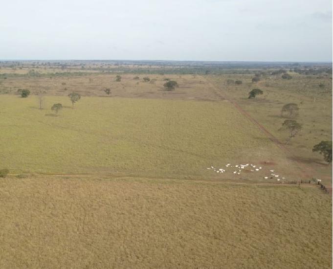 Excelente fazenda com 1.400 alqueires região três lagoas