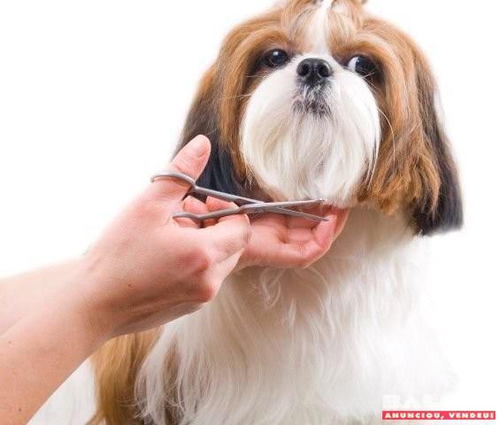 Tosador com experiência para clínica veterinária