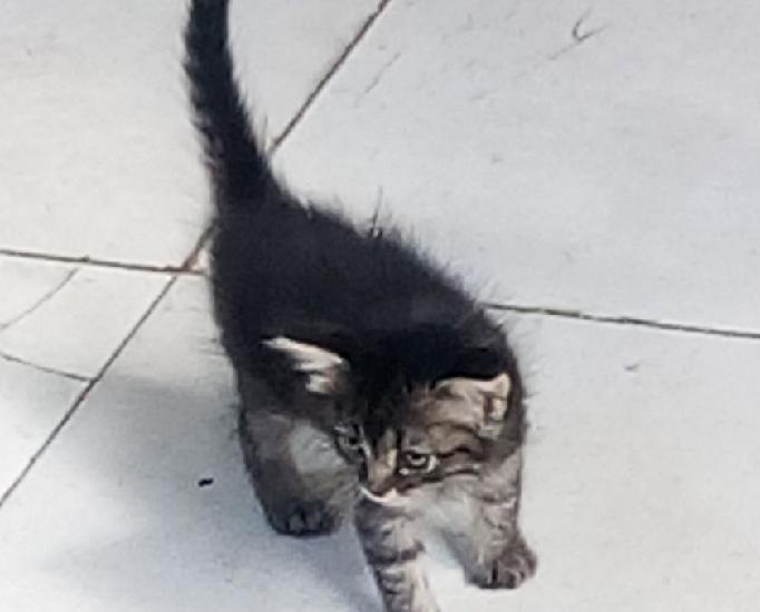 Doação responsável de filhote de gato