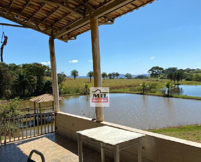 Fazenda 17 alqueires (82.28 hectares)- heitorai-go