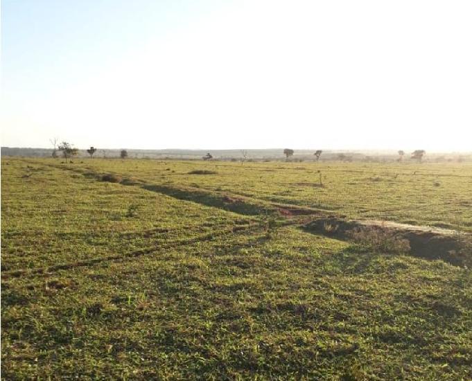Excelente fazenda com 754 alqueires região de brasilândia