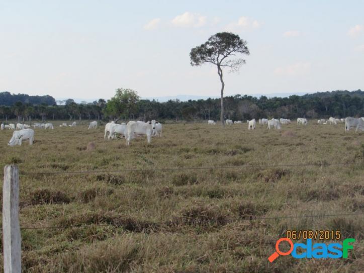 Fazenda para pecuária 10.507 hectares
