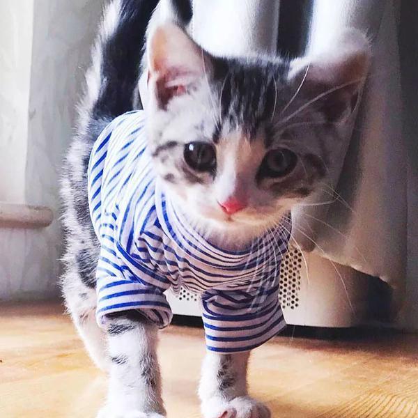 Camisa roupa pra seu pet gato cachorro
