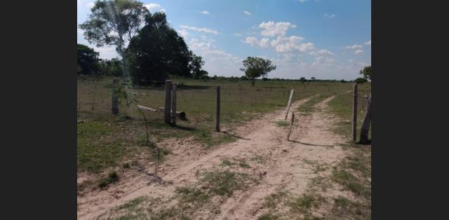 22 mil hectares pantanal cáceres mt - mgf imóveis