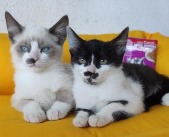 Luizinho e Margarida