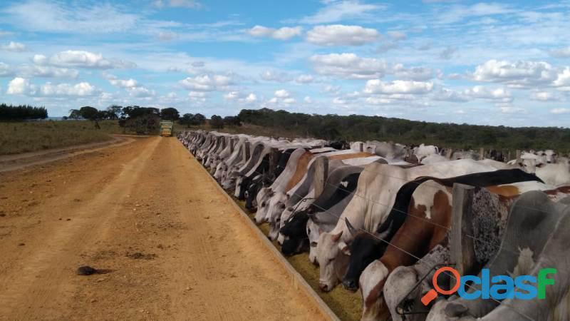 909 alqs ótima em tudo p/ agricultura bem estruturada mineiros go