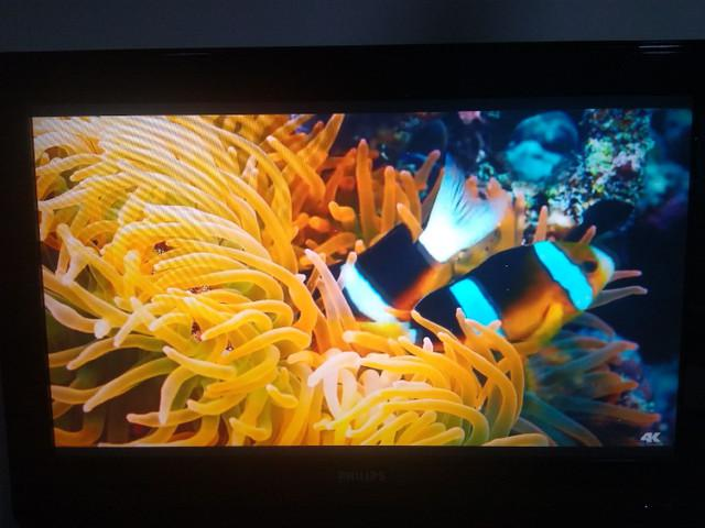 Tv philips lcd 32 pol - pc monitor