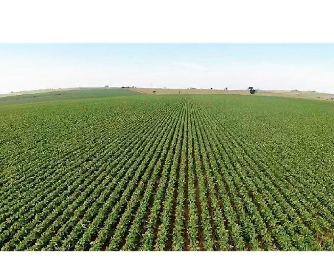 Fazenda em são paulo plantando soja área 600 alqueires