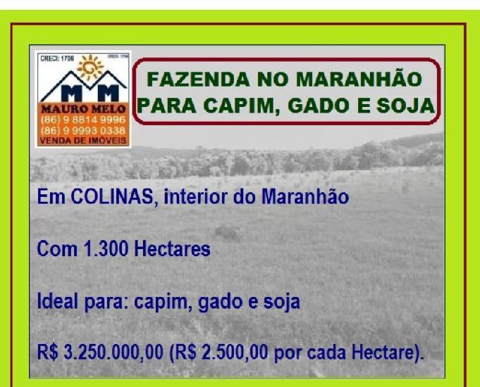 FAZENDA NO MARANHÃO PARA CAPIM, GADO E SOJA ===