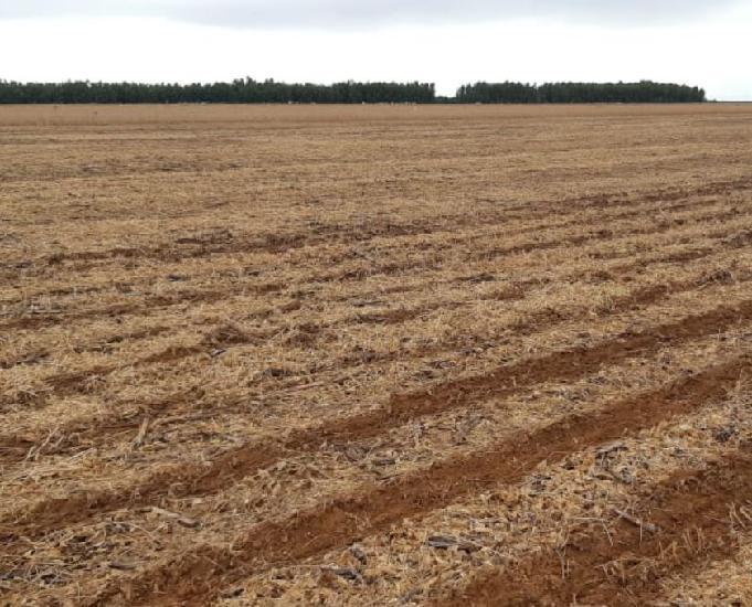 Fazenda com 16.531 hectares no mato grosso