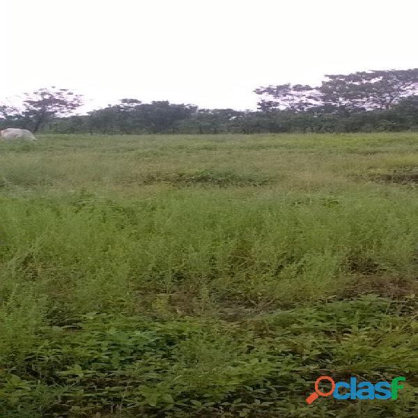 532 Alqs da Pivô Beira Rodovia Região Chuva da Loteamento Goiatins TO 3