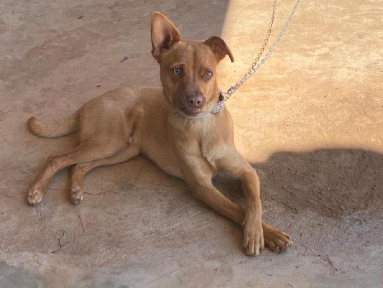Cachorro - bob (doação)