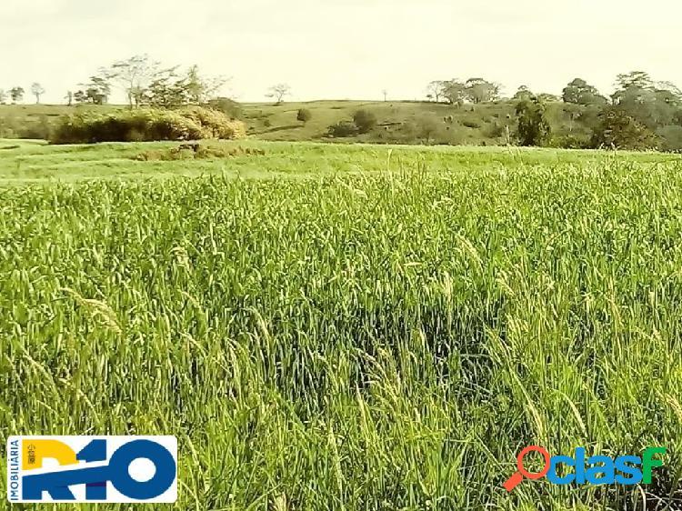Sitio a Venda com área de 32,4 Alqueires Região de jataizinho PR. 2