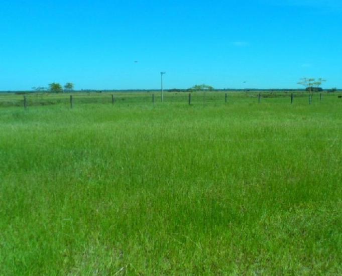 Oportunidade de fazenda com 1.023 hectares em bataiporã ms