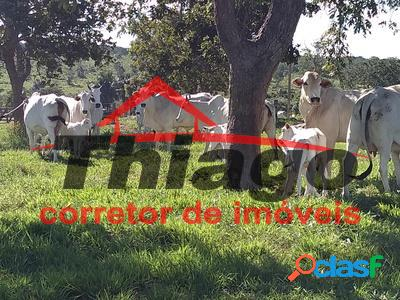 Fazenda em barra do garças - zona rural à venda