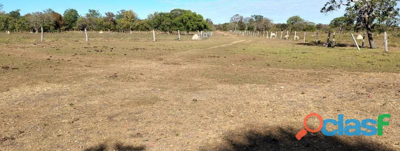 136 Planta Toda Plana Toda Aberta Paraíso TO 2