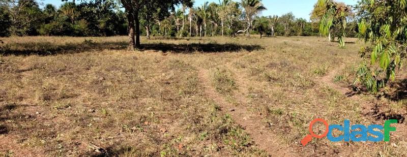 136 Planta Toda Plana Toda Aberta Paraíso TO 4