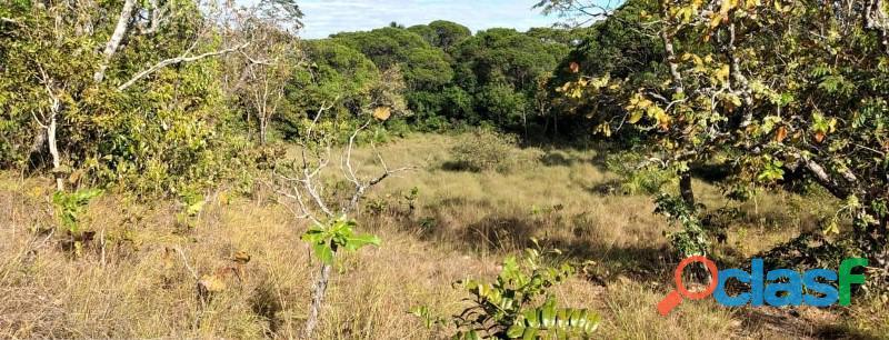 136 Planta Toda Plana Toda Aberta Paraíso TO 9