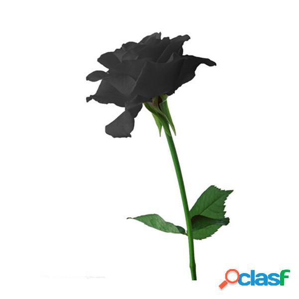 20 sementes de rosas negras