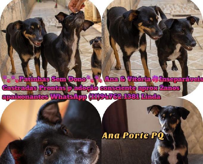 Ana & vitória, lindas e amorosas cachorrinhas porte p