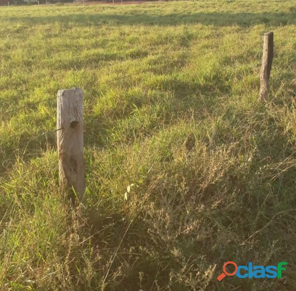 316 Alqs Boa Pastagens e Logística Cercada Benfeitorias Doverlandia GO 3