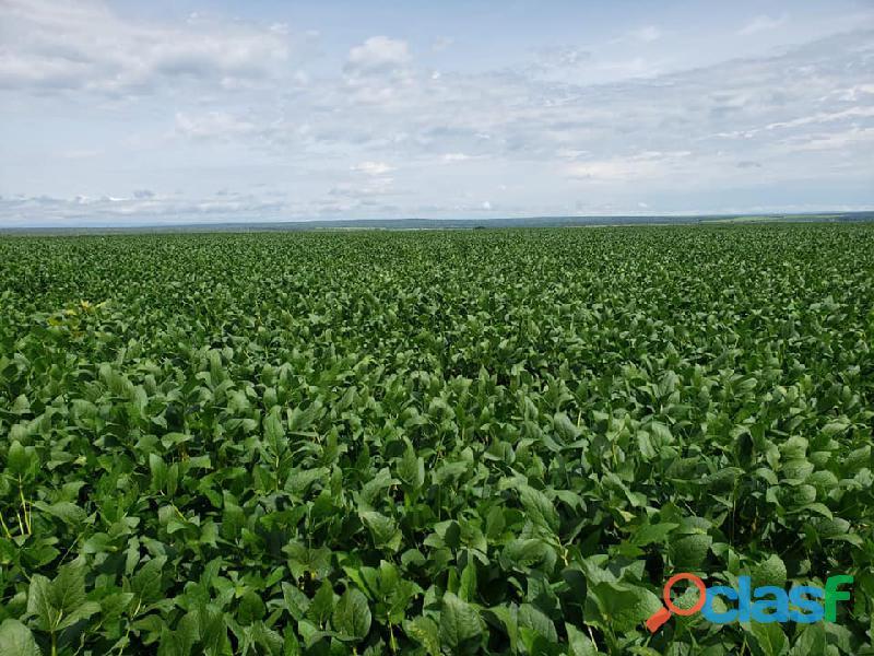 400 Alqs Plantando Metade Excelente em Tudo Tupiratins TO
