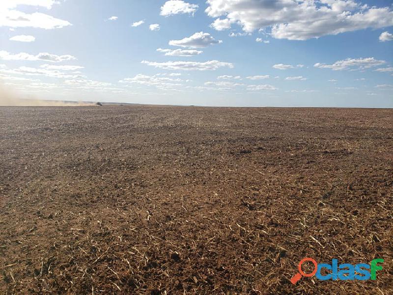 400 Alqs Plantando Metade Excelente em Tudo Tupiratins TO 2
