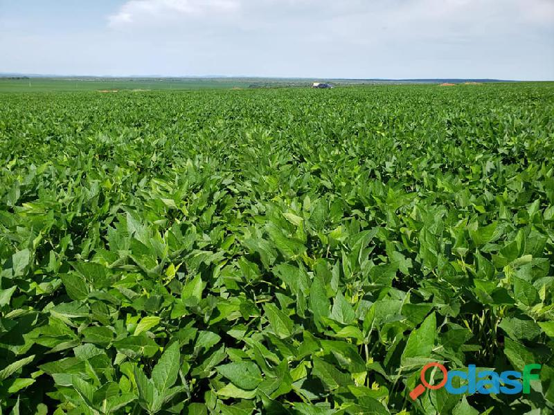 400 Alqs Plantando Metade Excelente em Tudo Tupiratins TO 3