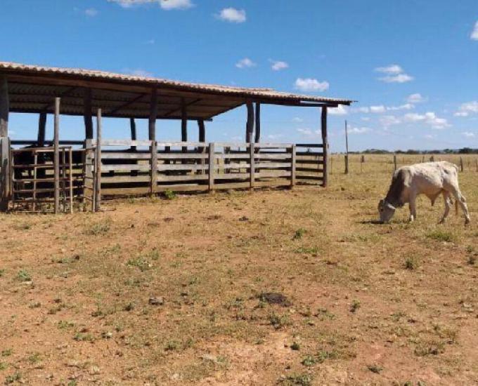 Fazenda para criação de pecuária a venda