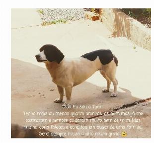 Cachorra de pequeno porte para doação