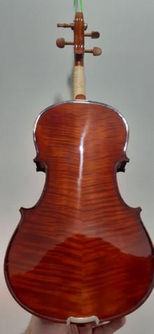 Viola eagle nova