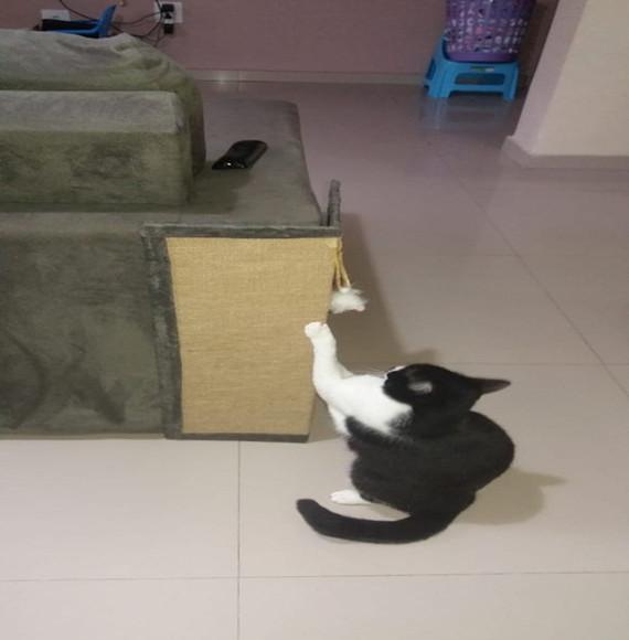 Arranhador de gato protetor canto de sofá cama box em sisal