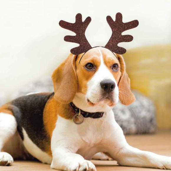 Chifre rena natalina pet em eva com glíter para cão ou