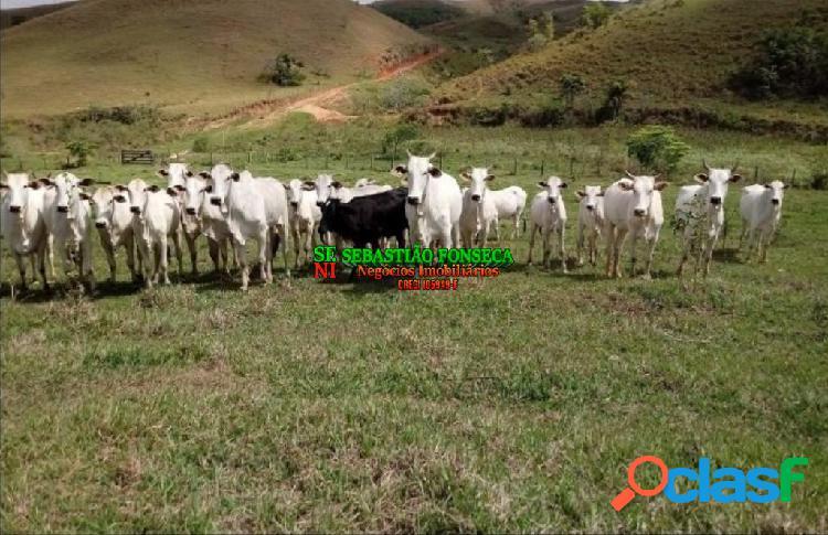 Fazenda 140 alqueires com nascentes em cachoeira paulista- sp