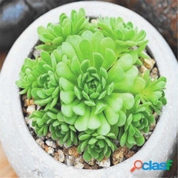50 pcs suculento sementes lotus lithops pseudotruncatella bonsai plantas sementes para casa & jardim