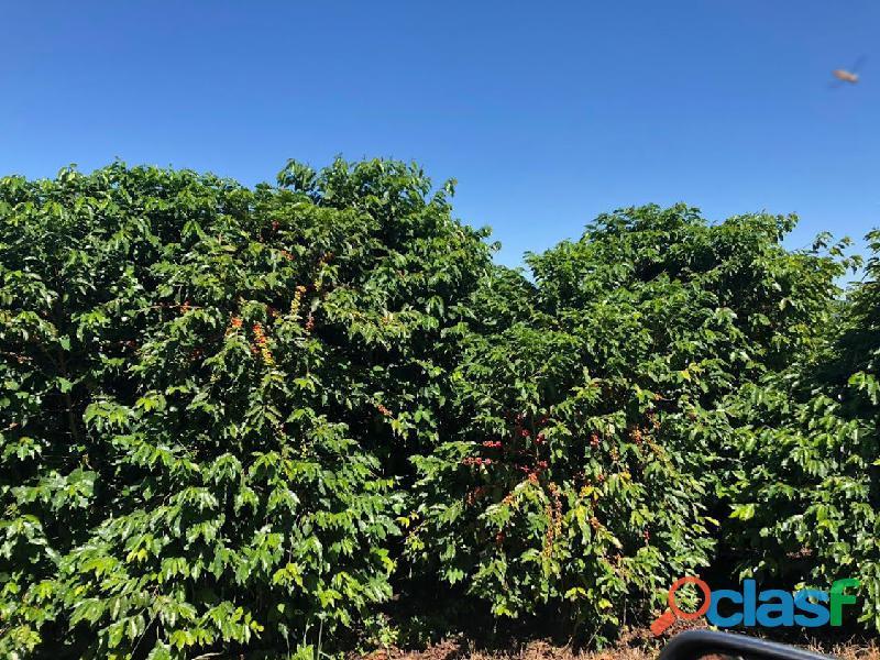 Fazenda Com 30 Alqueires Com 149 Mil Pés De Café Arábica Na Cidade de Caconde 15