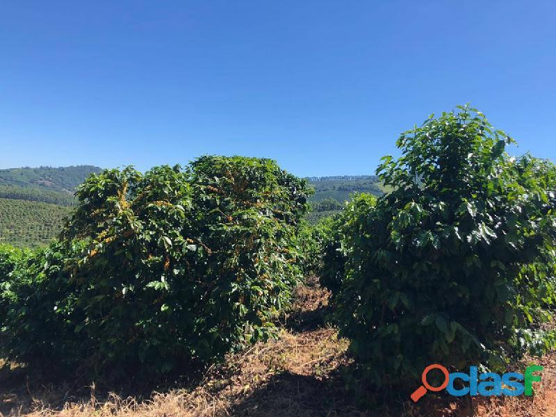 Fazenda Com 30 Alqueires Com 149 Mil Pés De Café Arábica Na Cidade de Caconde 14