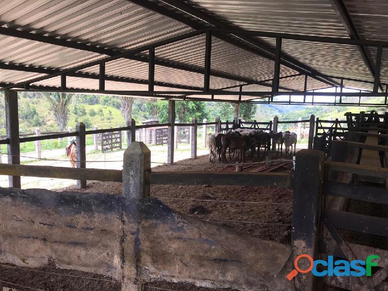 Fazenda em Itamaraju. . A 100 km. Jucuruçu 4