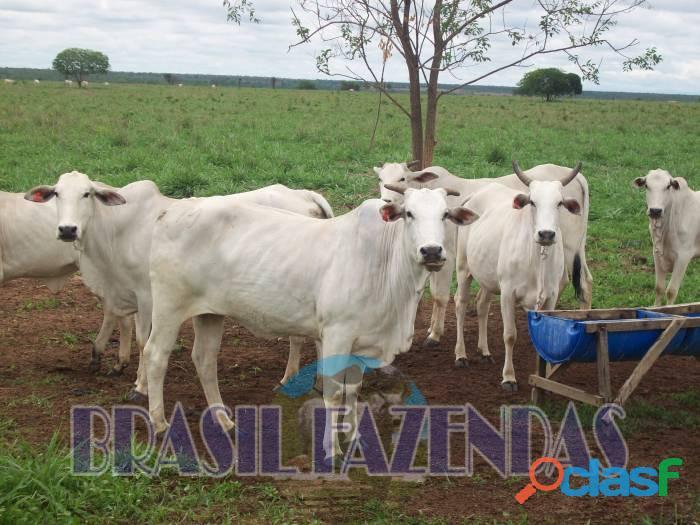 Fazenda na bahia oeste 21 mil hectares
