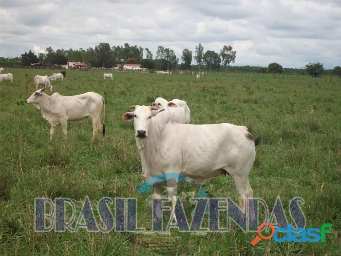 Fazenda na Bahia Oeste 21 mil hectares 1